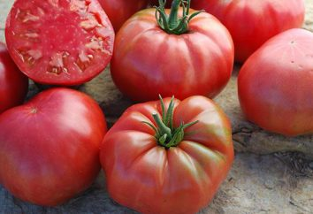 Zucchero di pomodoro bisonte: caratteristiche e descrizione della varietà, recensioni.