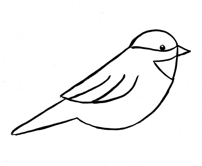 how to draw a cute bird easy