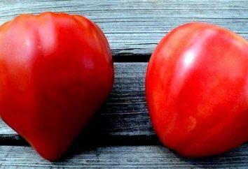"""Tomate """"corazón de buey"""": opiniones con fotos y consejos sobre crecimiento"""
