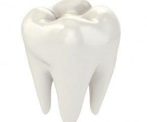 Struttura dei denti umani: schema e la descrizione