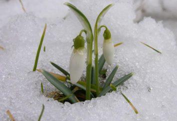 Quando comincia la primavera. Segni e segni