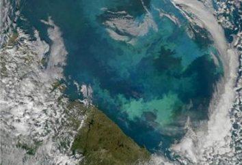 La temperatura y la salinidad del mar de Barents. ¿Qué es la salinidad del mar de Barents en ppm