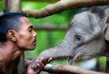 impact positif et négatif de l'homme sur les animaux: exemples