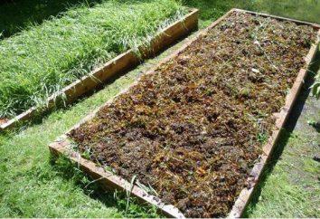Quand planter des engrais verts pour le jardin? Le meilleur engrais vert pour le jardin