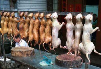 Que raça de cão comer coreanos