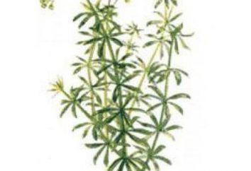 Gaillet doux et d'autres types de plantes: description et l'utilisation dans la médecine populaire,
