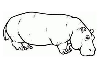 Jak narysować hipopotama: ołówek, stopniowo, dla dzieci