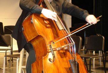Quantas cordas no baixo e como ela difere de outros instrumentos de cordas?