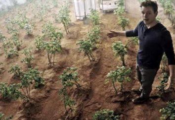 Cultivo – una forma de cultivo