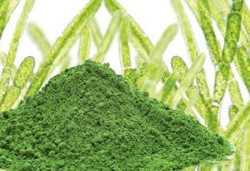 Chlorella – Chlorella algi jest …