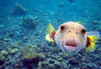 Qual è il cuore dei pesci? Camere di cuore di pesce