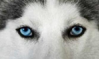 Come vedere il cane: le caratteristiche della loro visione