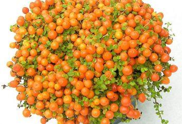 Fiore con bacche arancioni – raccogliere raccolta