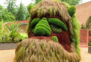Topiary sztuka: rodzaje i zdjęcia