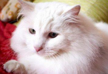 Kot chce kota: jak uspokoić i jakich narzędzi użyć?