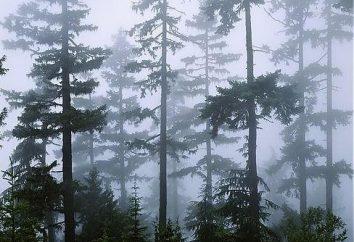 Welcher Baum Träume: das Unbewusste lassen wird enthüllt werden!