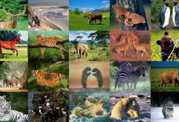 Główne rodzaje zwierząt. Klasyfikacja typów zwierząt:
