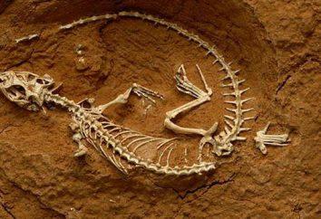 Ciò che la scienza studia i fossili di organismi estinti? analisi dettagliata