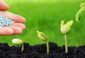 Nawóz do pieprzu. Przygotowanie gleby do sadzenia pieprz. Pepper: uprawa i utrzymanie w otwartym polu
