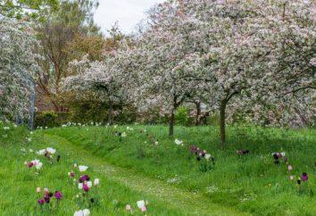 Quali alberi fioriscono a maggio in Russia