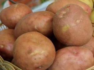 Kartoffeln Irbitsky: Note Beschreibung, Fotos, Bewertungen, Beratung bei der Kultivierung, Charakterisierung, Ausbeute