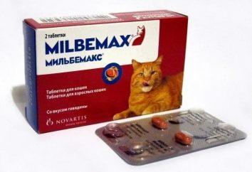 """Leczenie giuncjów: przygotowanie """"Milbemax"""" dla kotów"""