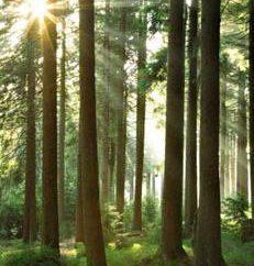 Forest – il nostro tesoro! Valore, la sicurezza e la protezione delle foreste. foresta russa