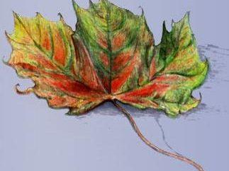 Jak rysować ołówkiem i maluje liści