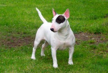 O cão mais feio do ranking mundial, descrição, características e comentários