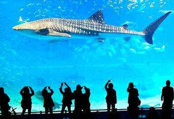 Aquarium of the Pacific w Bangkoku: zdjęcia, adres, opinie