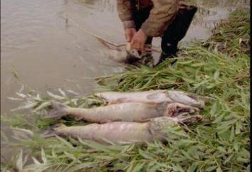 Pêche en Khakassie: photos et commentaires. rivière Khakassie: pêche