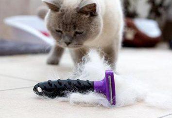 Peigne pour les chats: les types, les procédures de fonctionnement, les précautions