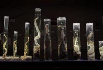 10 Museen der Welt, stürzte in einen Schockzustand
