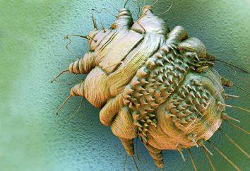 Obligate Parasiten: Typen, Eigenschaften, Beispiele