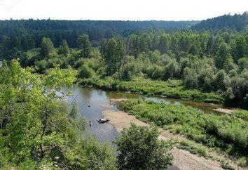 Iset rivière – Rivière poisson à l'odeur de chien