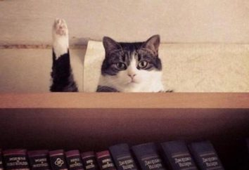 20 photos de chats, faites au bon moment