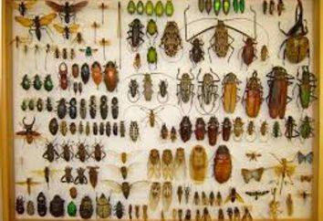 Entomologia – jest to nauka? Co studiuje entomologia