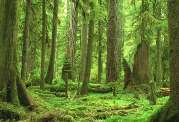 Che cosa è una foresta?