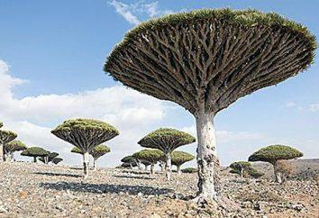 Pochi sanno ciò che le piante sono elencati come in via di estinzione