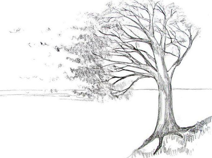 Jak narysowa wiatr badane razem przyk ad krajobraz i portret - Dessiner le vent ...