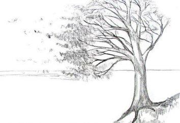 Jak narysować wiatr? Badane razem przykład krajobraz i portret