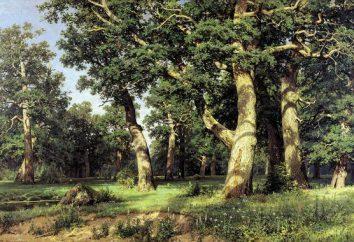 Anlage Mischwälder: Eigenschaften. Anlage Mischwälder von Russland und Tiere