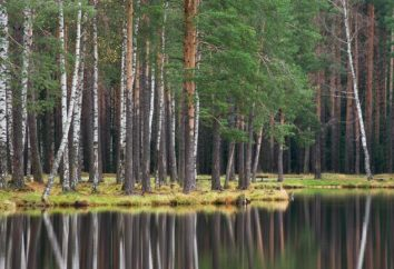 Korkinskom Lago – perla del distretto di Vsevolozhsk