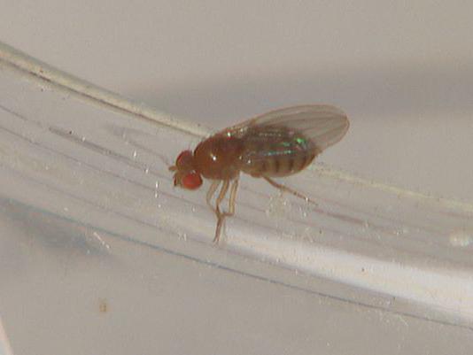 comment tuer une mouche dans la maison?