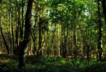 – Im dalej do lasu, tym więcej drewna. Znaczenie i istota przysłowia
