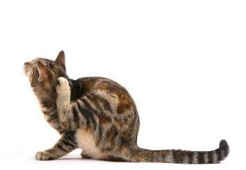 """Dlaczego muszę leków """"Stronghold"""" dla kotów i jak się go stosuje"""