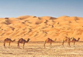 Viajar en Emiratos Árabes Unidos: críticas viajeros