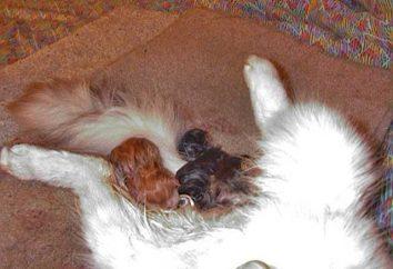 Come nascere nei gatti: importanti raccomandazioni