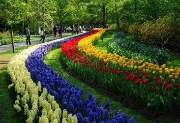 Keukenhof (park) – tkany dywan kwiatowy przyrody