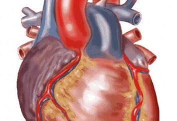 Układ krążenia i układu oddechowego u ssaków. Organy tworzące układ krążenia ssaków